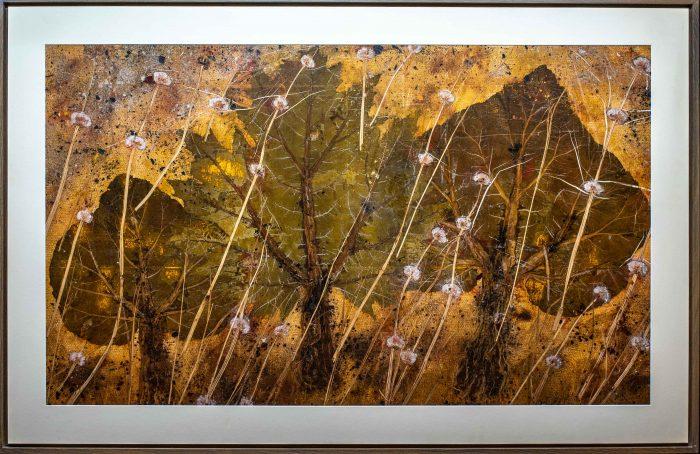 621 Mystische Bäume 155x101 cm